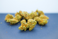 The best Candy Kush Weed