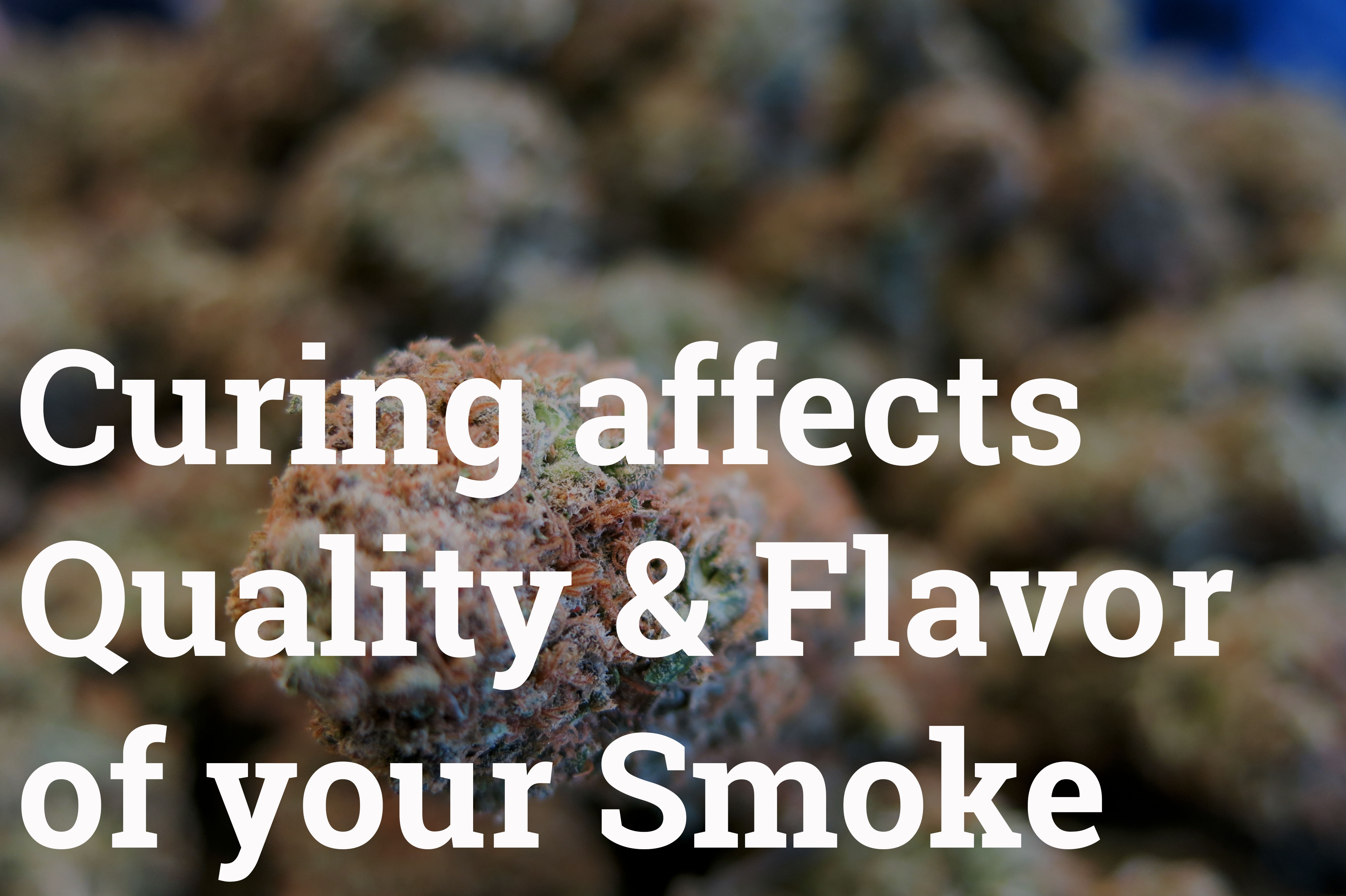 Curing effects the quality and flavor