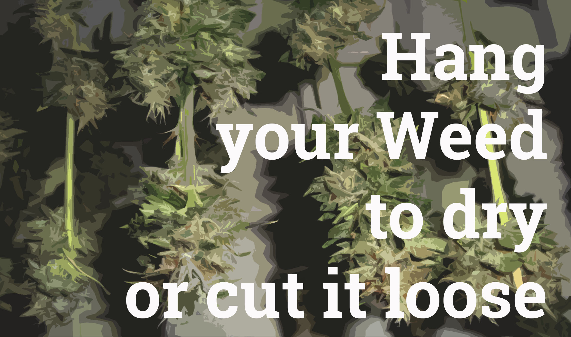 Cutting weed trimming cannabis carefully