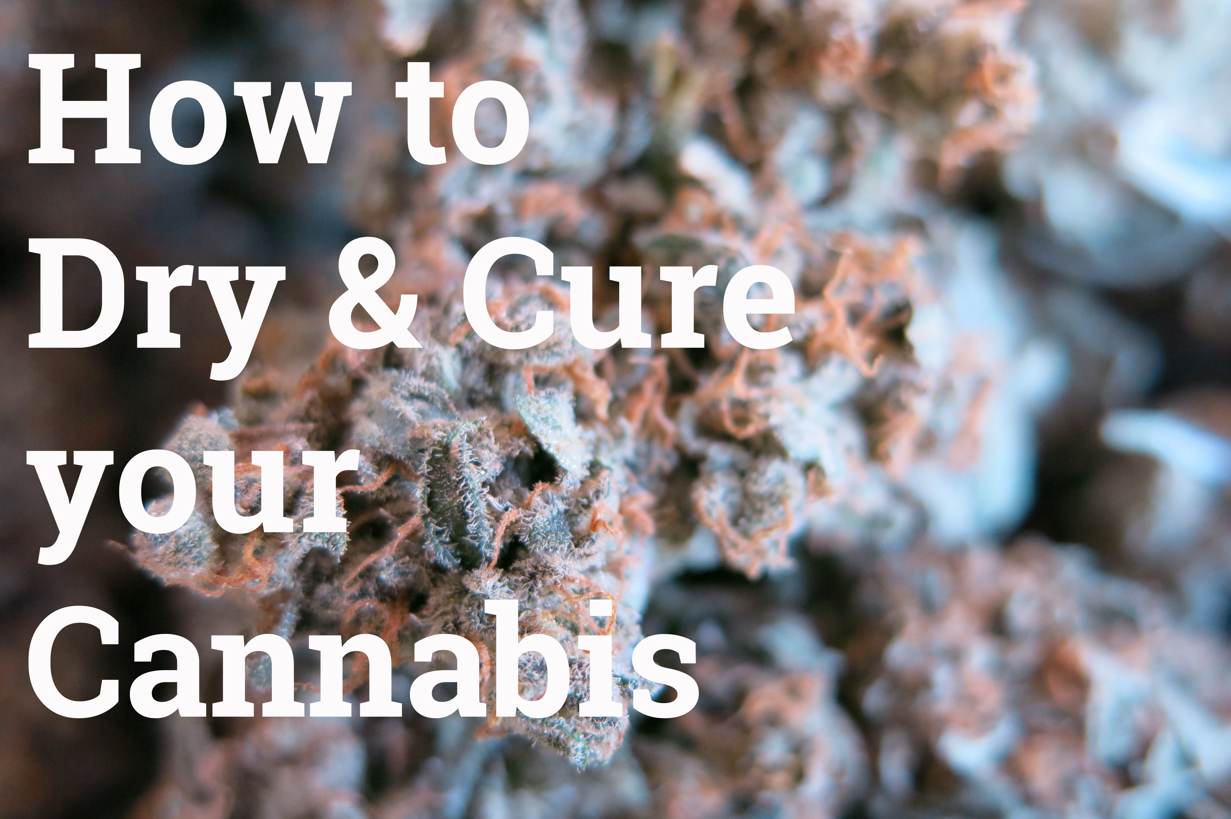 How to dry and cure your cannabis best coffeeshop amsterdam bestfriends best friends coffeeshoops